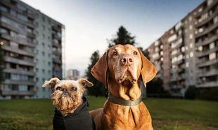 "Fotonäitus ""Urban dogs - Tallinna koerad"""